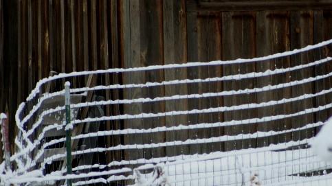 snowalone2